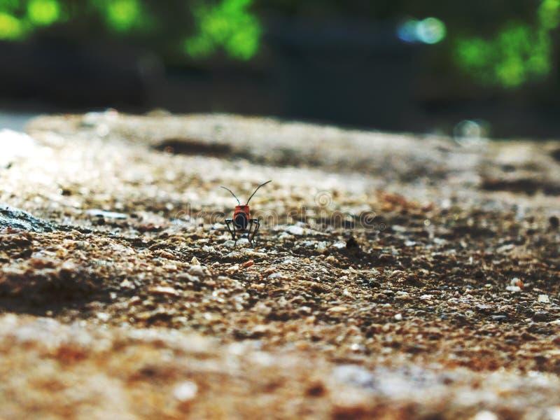 Kleines Insekt lizenzfreie stockbilder