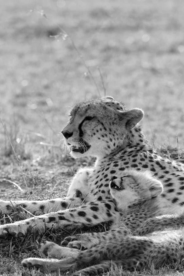 Kleines Junges, das auf ihrer Mutter stillsteht stockbild