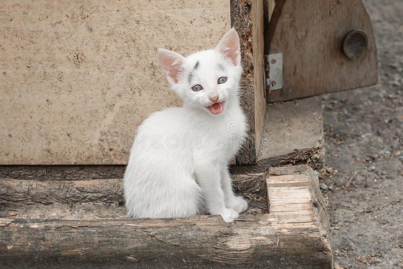 Kleines Kätzchen Adoroble sitzt vor ihrem Haus lizenzfreie stockbilder