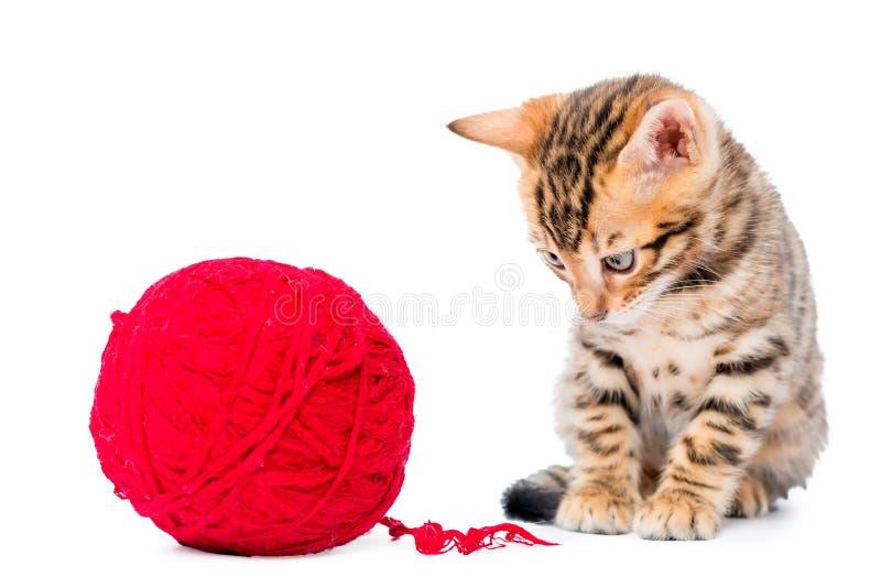 Kleines Kätzchen Bengals, das mit der roten Schlaufe lokalisiert spielt stockfotos