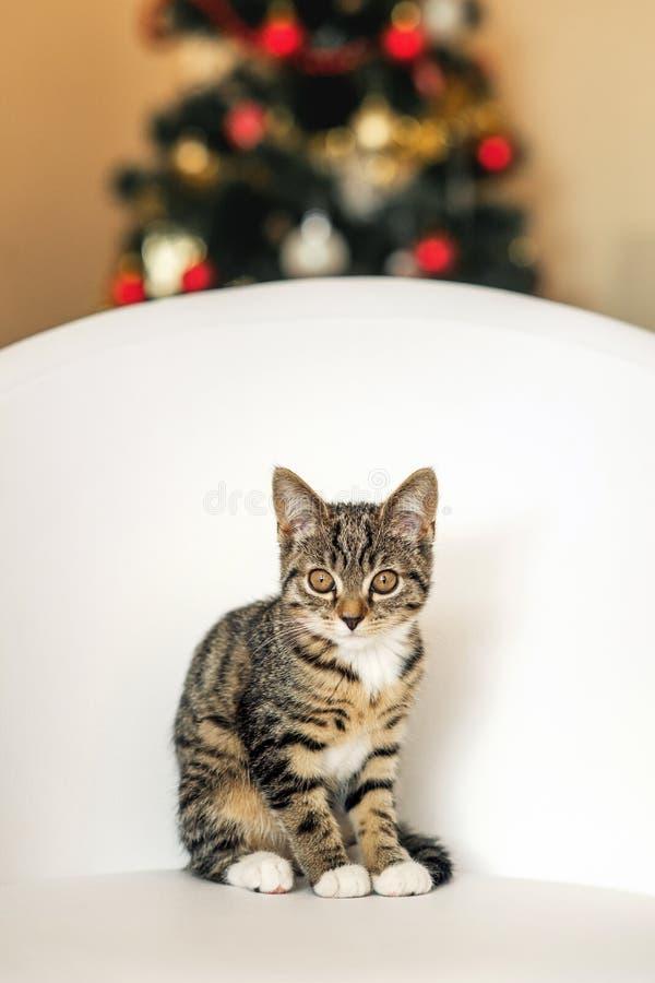 Kleines Kätzchen, das auf einem weißen Lederstuhl auf dem Hintergrund des Weihnachtsbaums sitzt lizenzfreies stockbild