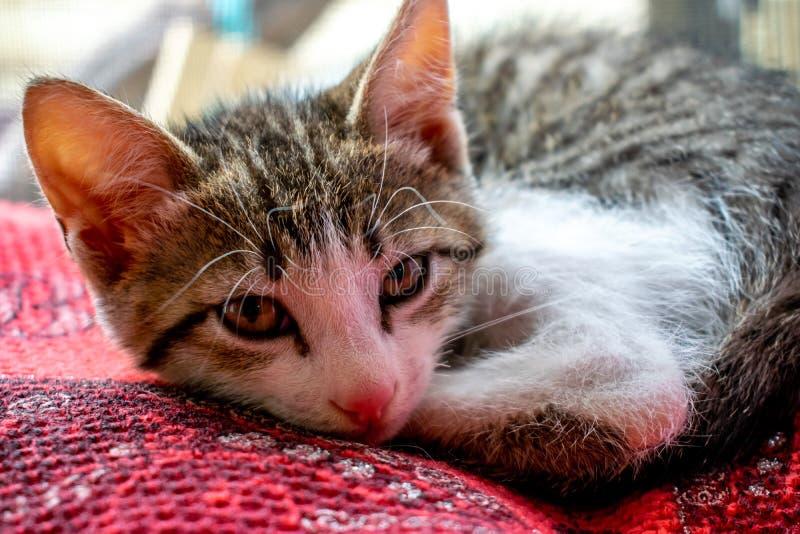 Kleines Kätzchen, das auf einer Bettdecke liegt Kleine Katze schläft süß als kleines Bett Katze im tiefen Schlaf lizenzfreie stockbilder