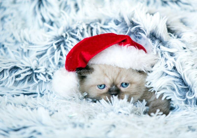 Kleines Kätzchen, das Sankt-Hut trägt lizenzfreies stockbild