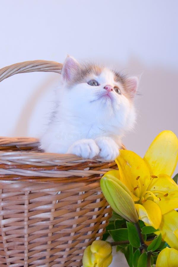 Kleines Kätzchen in einem Korb und in den Blumen stockfotografie