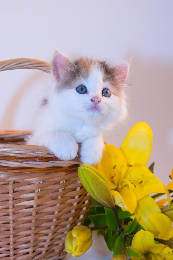 Kleines Kätzchen in einem Korb und in den Blumen stockfoto