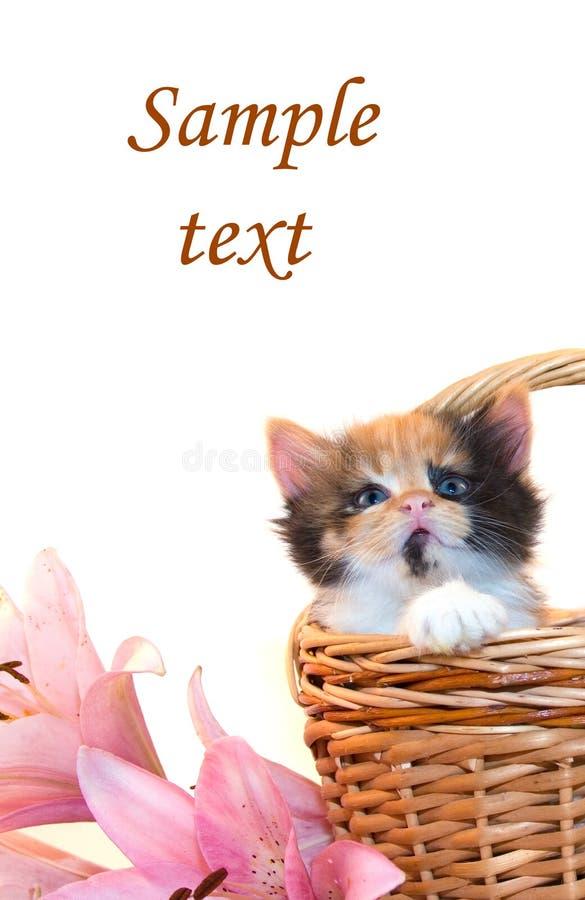 Kleines Kätzchen in einem Korb und in den Blumen stockbilder