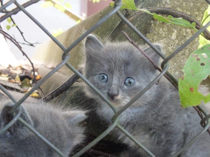 Kleines Kätzchen hinter einem Gitter lizenzfreie stockbilder