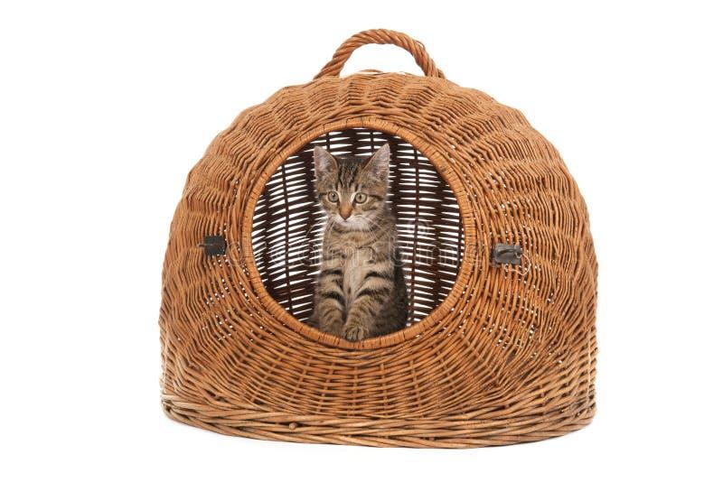 Kleines Kätzchen im Reisekorb lizenzfreie stockfotos