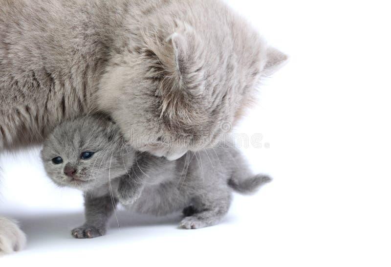 Kleines Kätzchen mit Mutter lizenzfreies stockbild