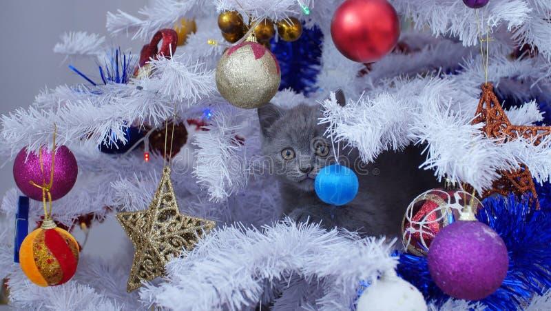 Kleines Kätzchen oben in einem Weihnachtsbaum stockfoto