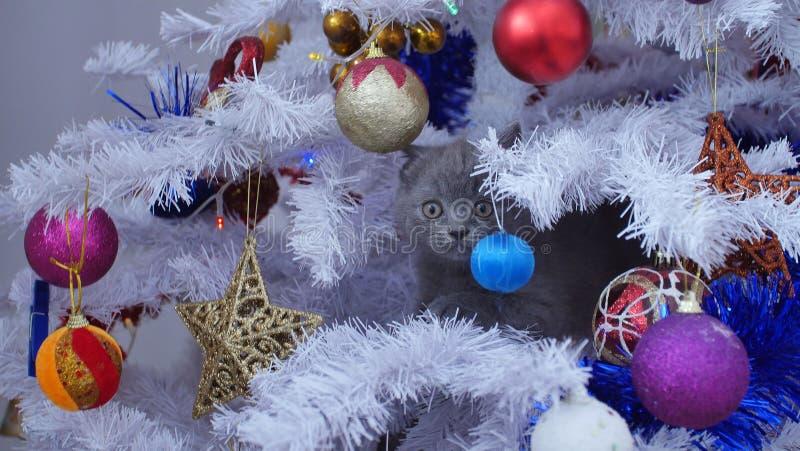 Kleines Kätzchen oben in einem Weihnachtsbaum lizenzfreie stockbilder