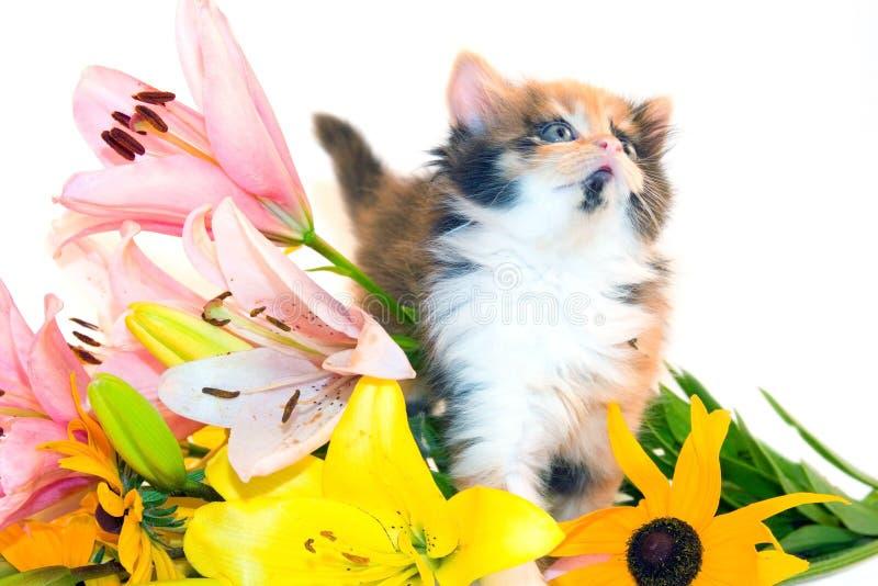 Kleines Kätzchen und Blumen stockbild