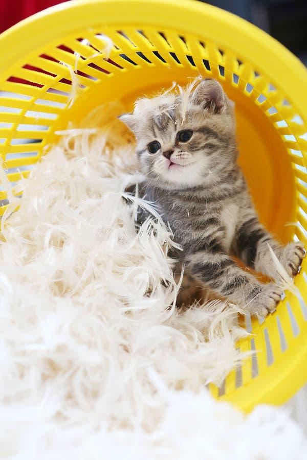 Kleines Kätzchen unter weißen Federn stockbild