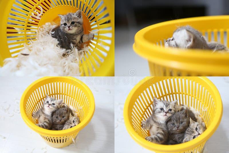 Kleines Kätzchen unter weißen Federn, multicam, Schirm des Gitters 2x2 lizenzfreies stockfoto