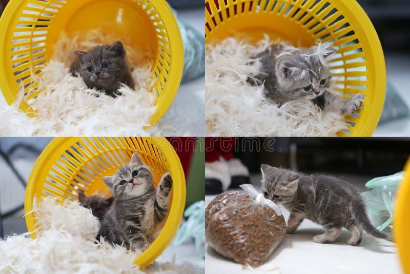 Kleines Kätzchen unter weißen Federn, Schirm spaltete sich in vier Teilen auf stockfotografie