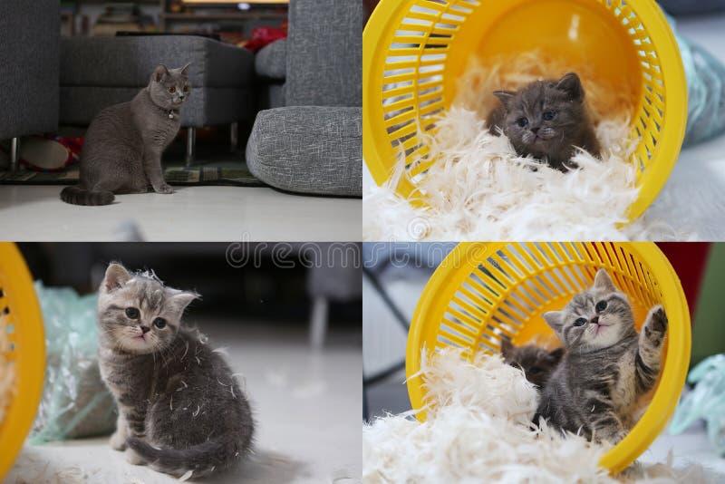 Kleines Kätzchen unter weißen Federn, Schirm spaltete sich in vier Teilen auf stockfoto