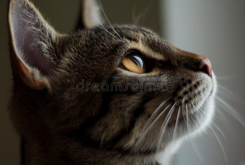 Kleines Kätzchen, welches heraus das Fenster schaut lizenzfreie stockbilder
