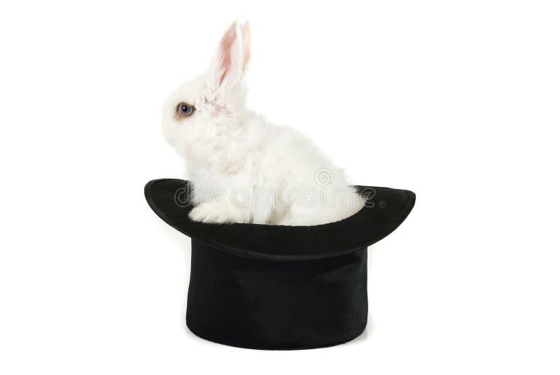 Download Kleines Kaninchen stockfoto. Bild von intelligent, huge - 12202600