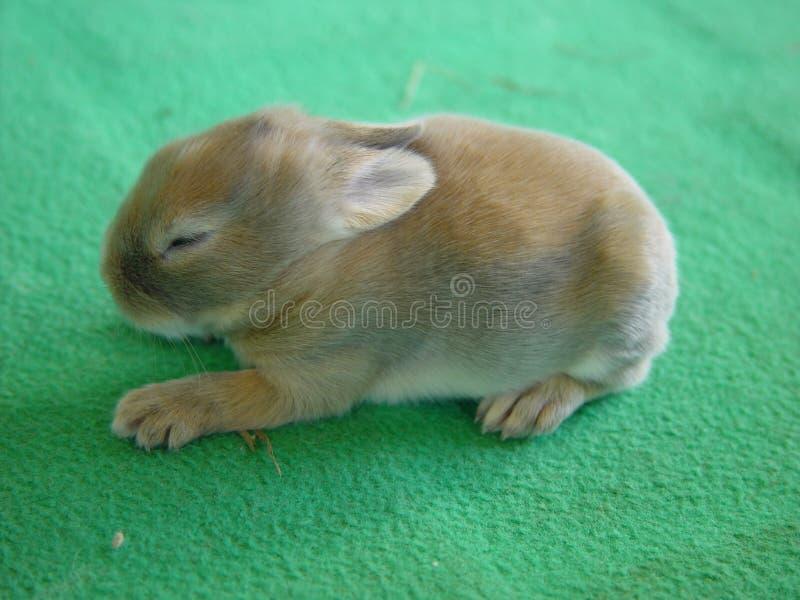 Kleines Kaninchen lizenzfreies stockfoto