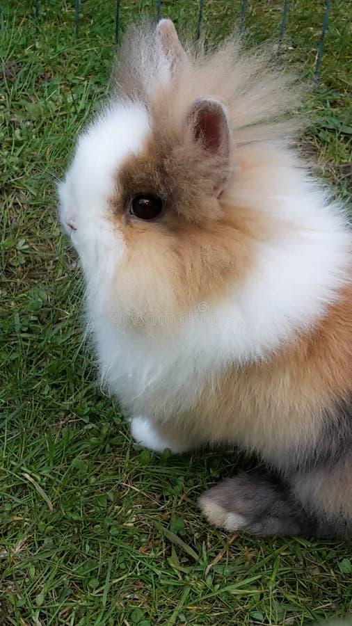 Kleines Kaninchen stockbild