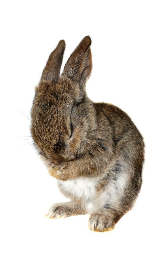 Download Kleines Kaninchen, Isolat stockbild. Bild von klein, hintergrund - 9083733