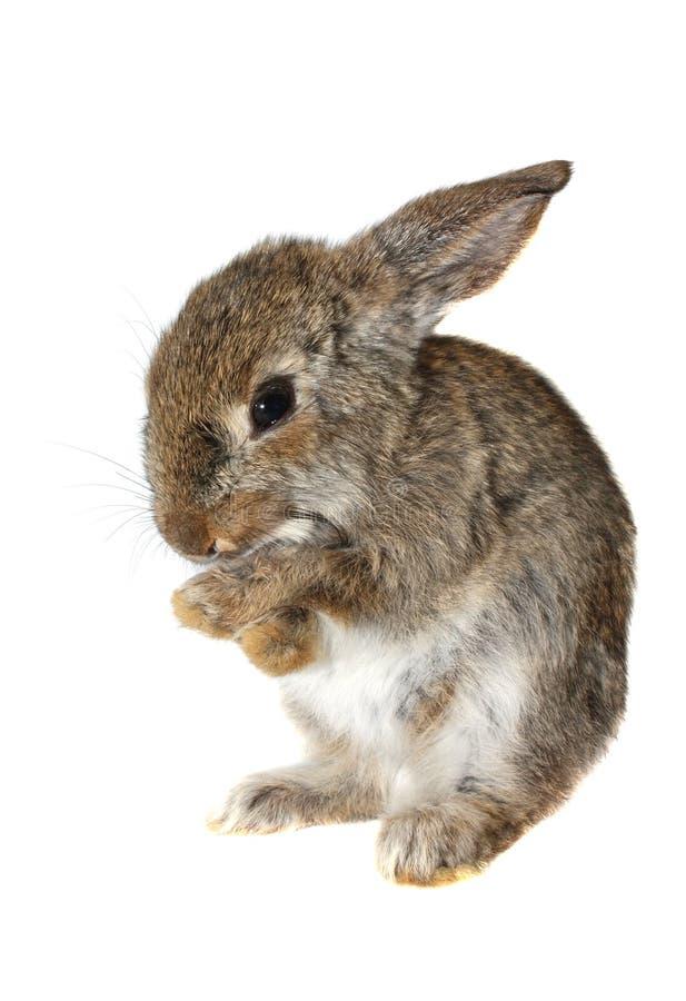 Download Kleines Kaninchen, Isolat stockfoto. Bild von kaninchen - 9083750