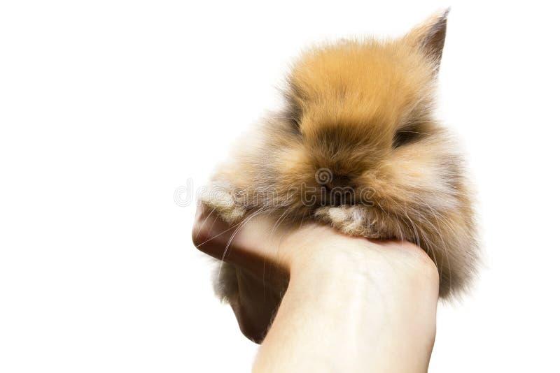 Kleines Kaninchen lokalisiert auf Weiß lizenzfreie stockfotos