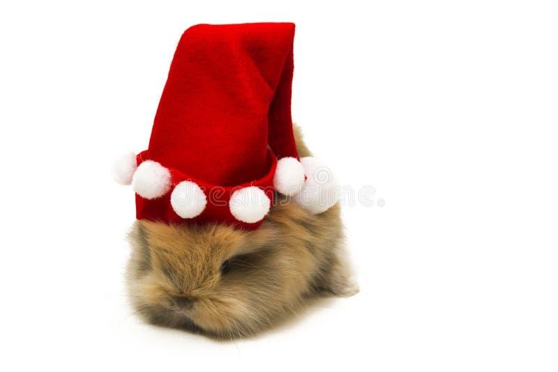 Kleines Kaninchen mit dem Weihnachtshut lokalisiert auf weißem Hintergrund lizenzfreie stockfotos