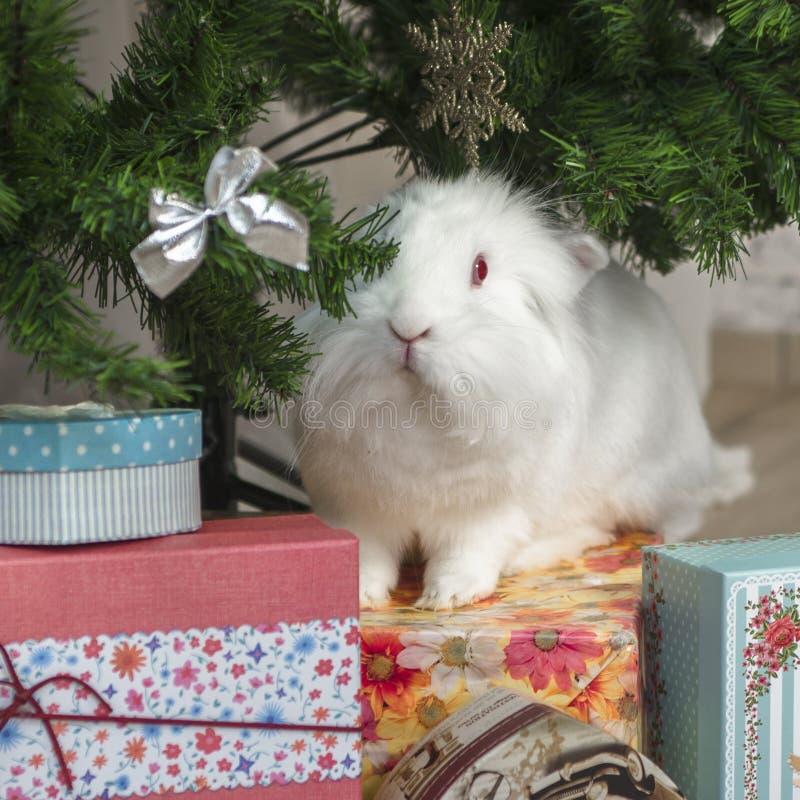 Kleines Kaninchen sitzt unter dem Weihnachtsbaum lizenzfreie stockfotos