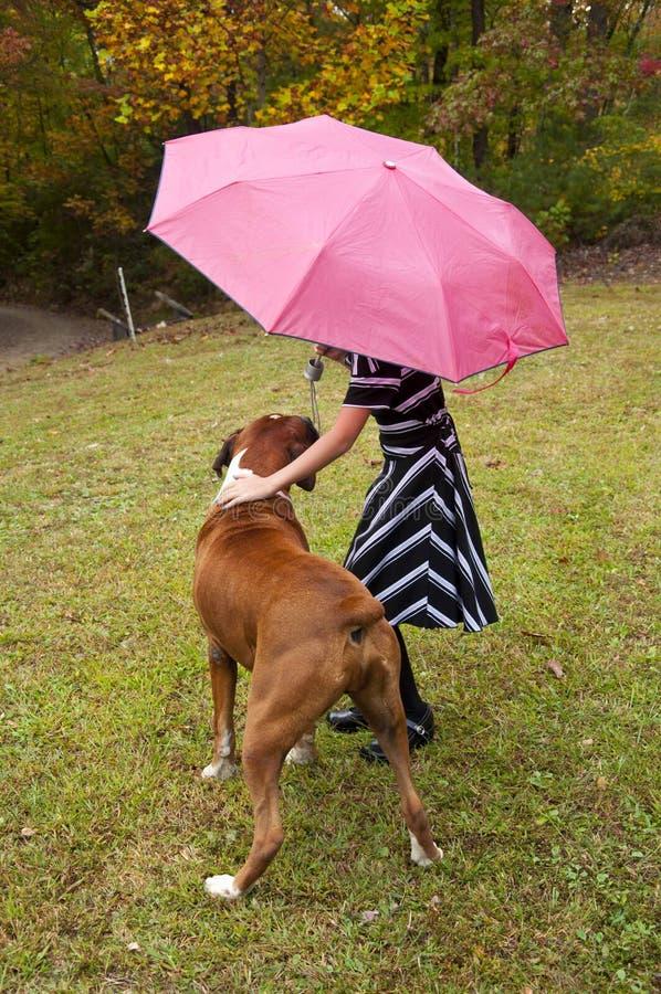 Kleines Kind, rosa Regenschirm, gestreiftes Kleid und Boxerbulldogge spielt im Regen lizenzfreies stockbild