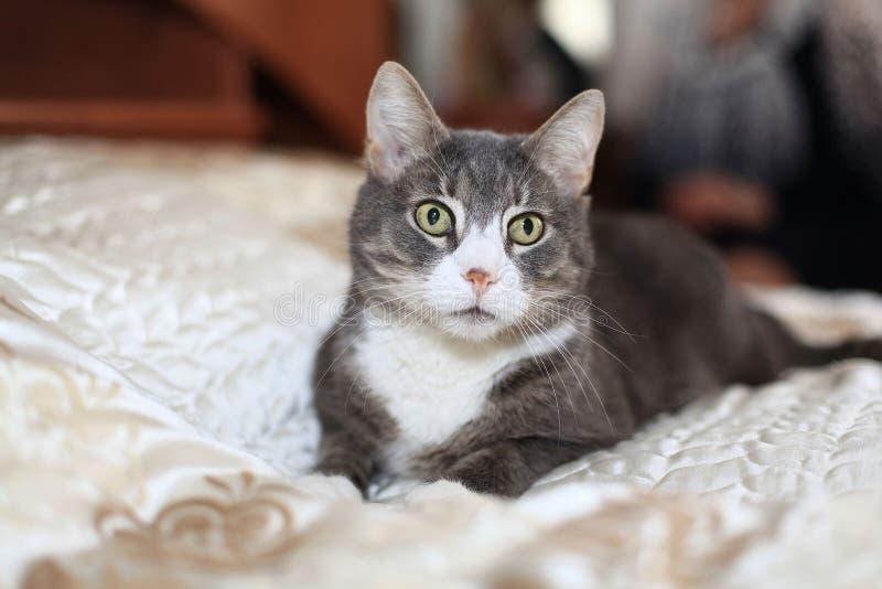 Kleines lustiges Schwarzweiss-Kätzchen stockfotografie