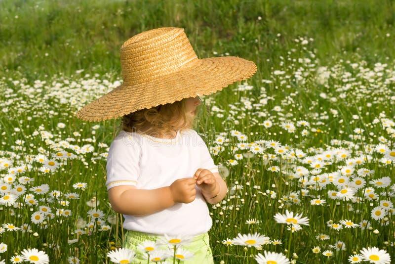 Kleines Mädchen auf dem Gänseblümchenfeld stockbild