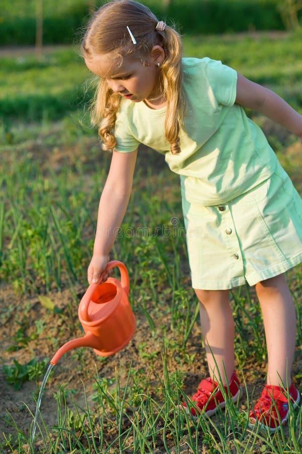 Kleines Mädchen, das die Zwiebelensämlinge wässert stockfotografie