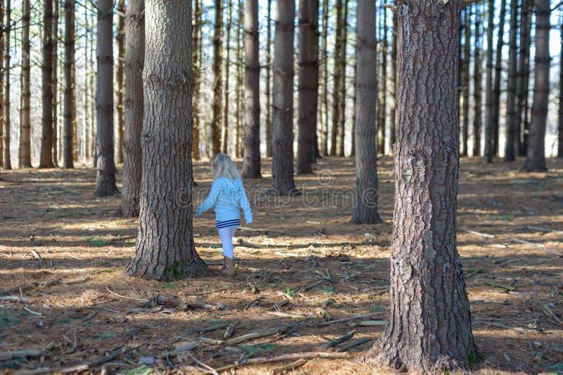 Kleines Mädchen, das durch Wald geht stockfotografie