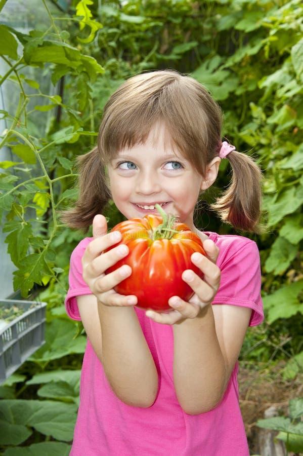Kleines Mädchen, das eine große rote Tomate anhält stockfoto
