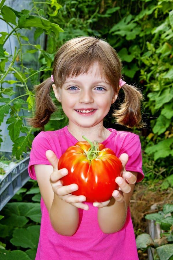 Kleines Mädchen, das eine große Tomate anhält lizenzfreies stockfoto