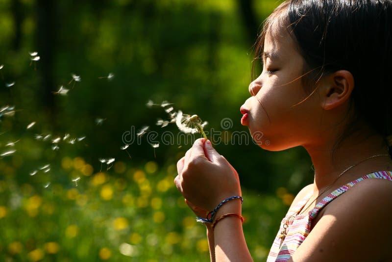 Kleines Mädchen, das einen Löwenzahn durchbrennt stockfoto