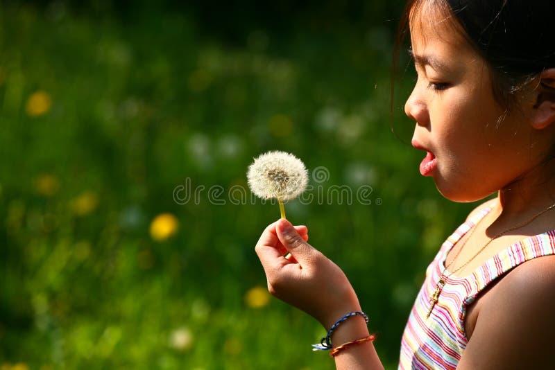 Kleines Mädchen, das einen Löwenzahn durchbrennt lizenzfreie stockbilder