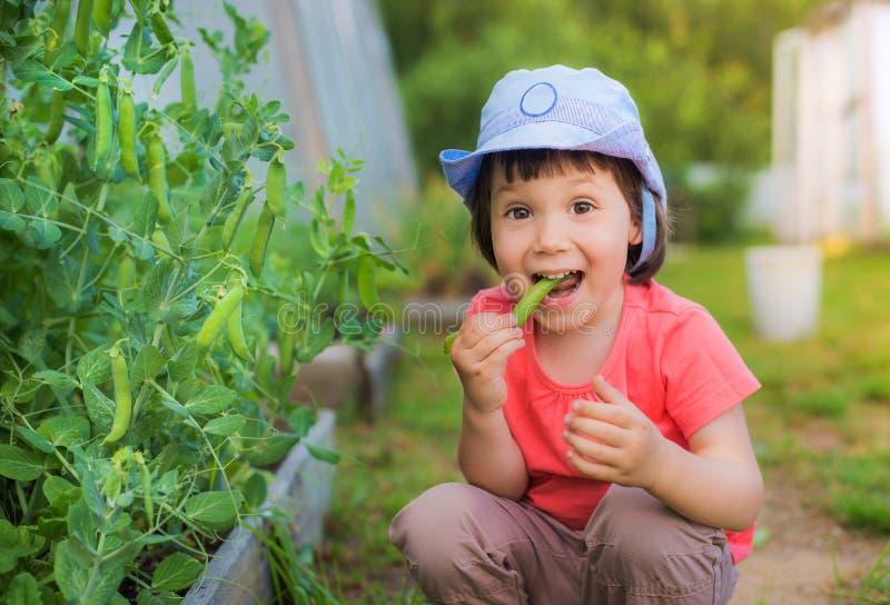 Kleines Mädchen, das frische grüne Erbsen essend auf dem Garten im Garten sitzt Nützliche Säuglingsnahrung lizenzfreie stockbilder