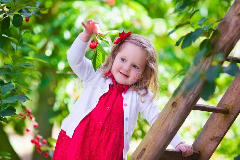Kleines Mädchen, das frische Kirschbeere im Garten auswählt stockbilder