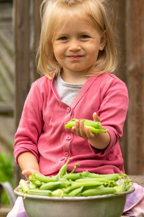 Kleines Mädchen, das Hülsen der grünen Erbsen in ihrer Hand nahe einer Schüssel voll von den reifen Erbsenhülsen und vom Lächeln  stockfotografie