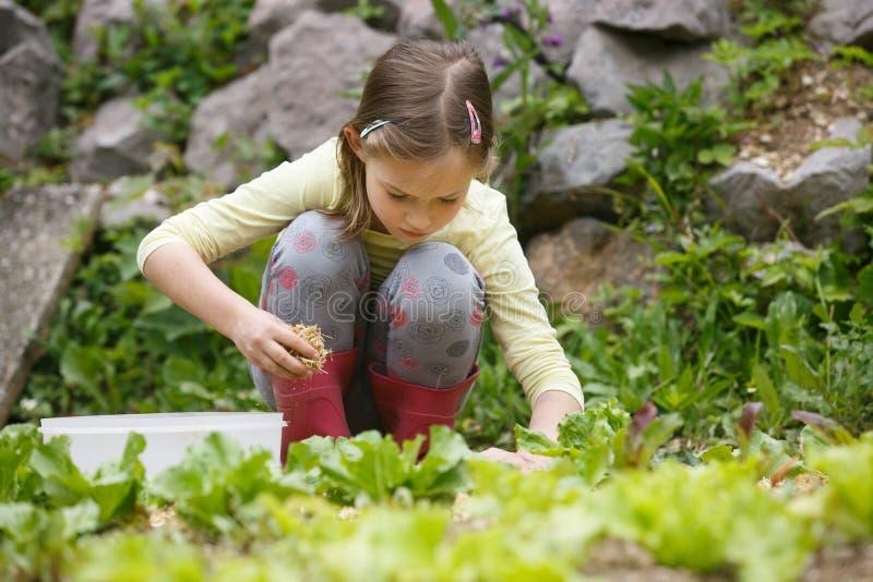 Kleines Mädchen, das im Garten arbeitet stockfotografie