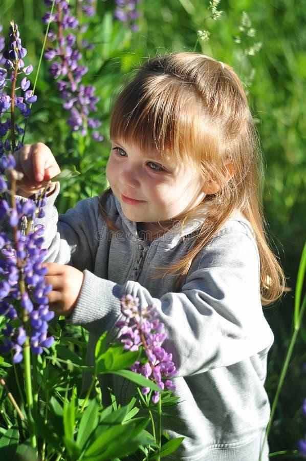 Kleines Mädchen, das im sonnigen blühenden Wald, heraus schauend vom Gras spielt Kleinkindkindersammeln Lupineblumen Kinderspiel  lizenzfreie stockbilder