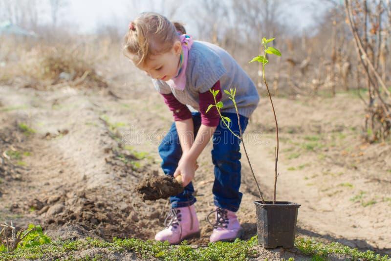 Kleines Mädchen, das Mandelbaum in einem Garten pflanzt stockfotos
