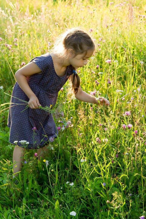 Kleines Mädchen, das wilde Blumen auf der Wiese auswählt stockfotos