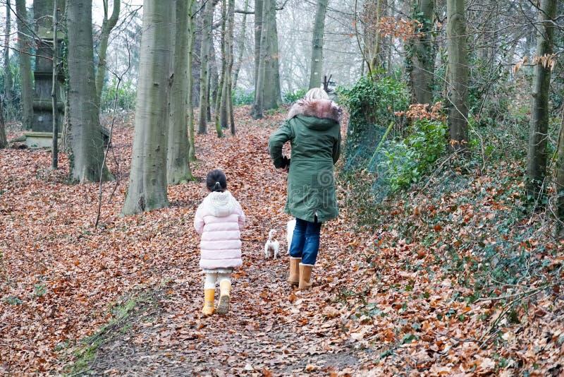 Kleines Mädchen der Großmutter und des Enkelkindes, das zusammen mit den Hunden im Landschaftsvorortbereich geht lizenzfreie stockfotos