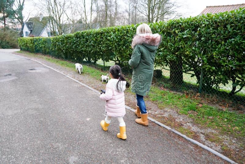 Kleines Mädchen der Großmutter und des Enkelkindes, das zusammen mit den Hunden im Landschaftsvorortbereich geht stockbild