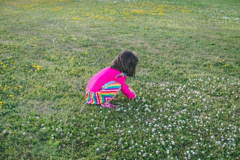 Kleines Mädchen in einem Kleid unten duckend, um Blumen auf dem Gras aufzuheben stockbild