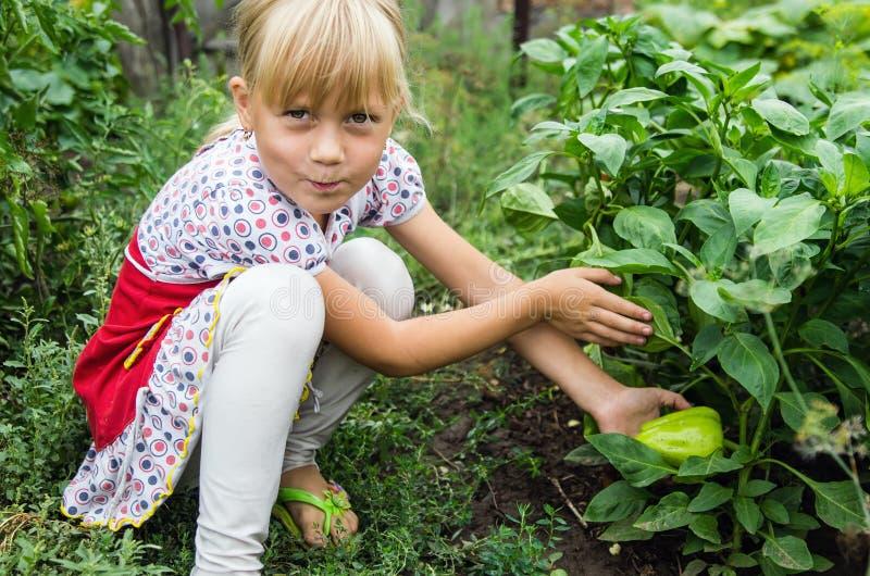 Kleines Mädchen im Garten neben den Betten mit Pfeffern stockfoto