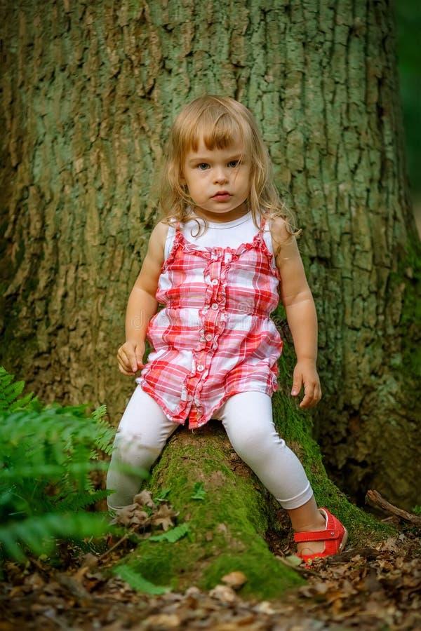 Download Kleines Mädchen im Wald stockbild. Bild von mädchen, wald - 26370023